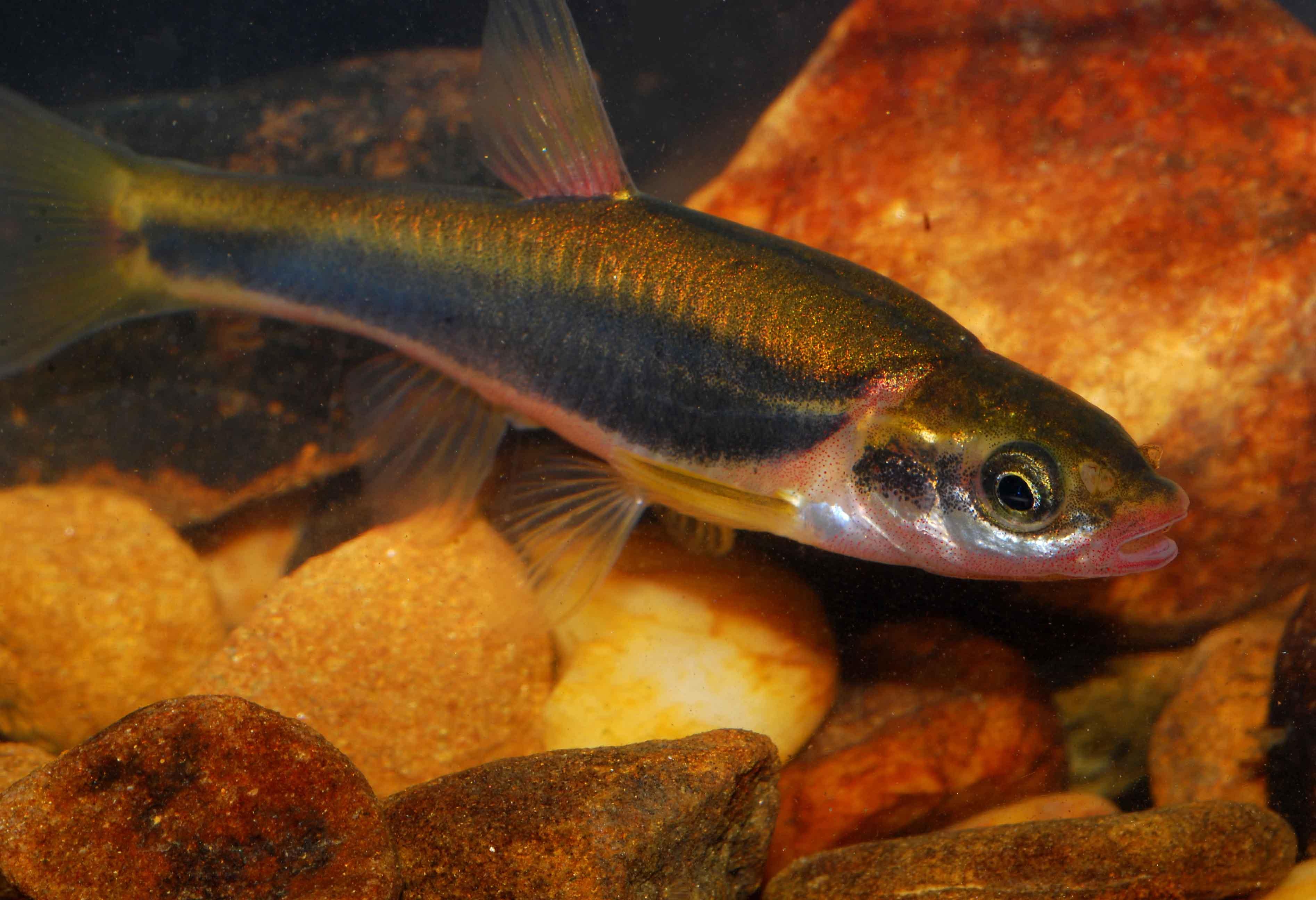 Copperhead Consulting, Kentucky Aquatic Ecology Surveys