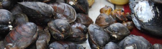 Ohio River Mussel Survey