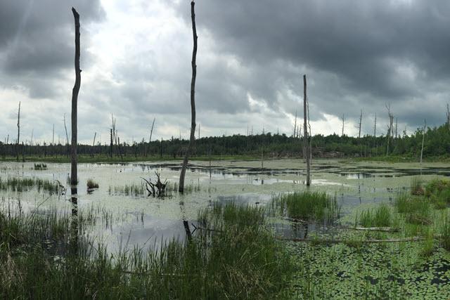 Wetlands 2-640×427