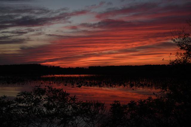 Wetlands 3-640×427